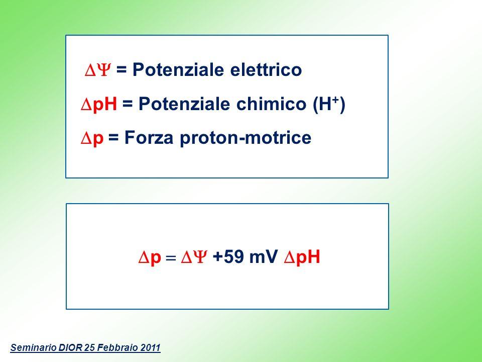 DpH = Potenziale chimico (H+) Dp = Forza proton-motrice