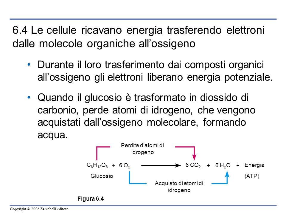 6.4 Le cellule ricavano energia trasferendo elettroni dalle molecole organiche all'ossigeno
