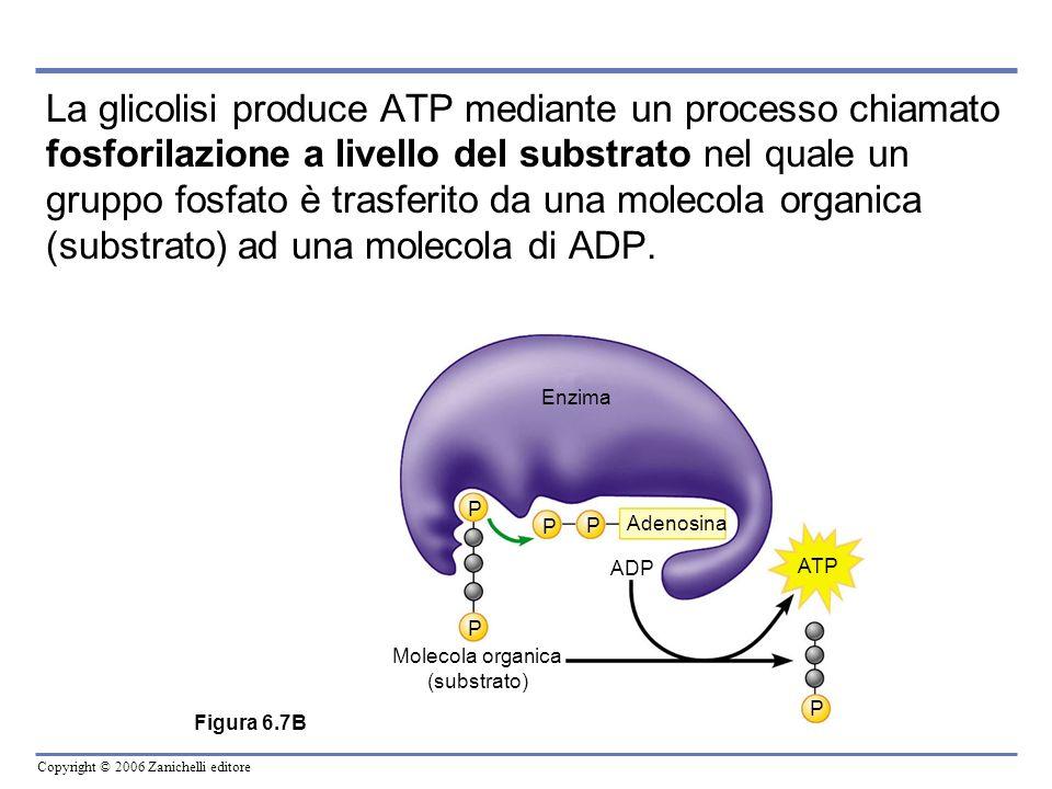 La glicolisi produce ATP mediante un processo chiamato fosforilazione a livello del substrato nel quale un gruppo fosfato è trasferito da una molecola organica (substrato) ad una molecola di ADP.