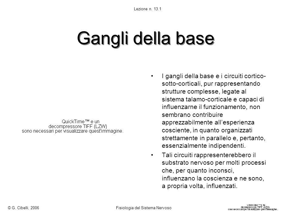 © G. Cibelli, 2006 Fisiologia del Sistema Nervoso. Lezione n. 13.1. Gangli della base.