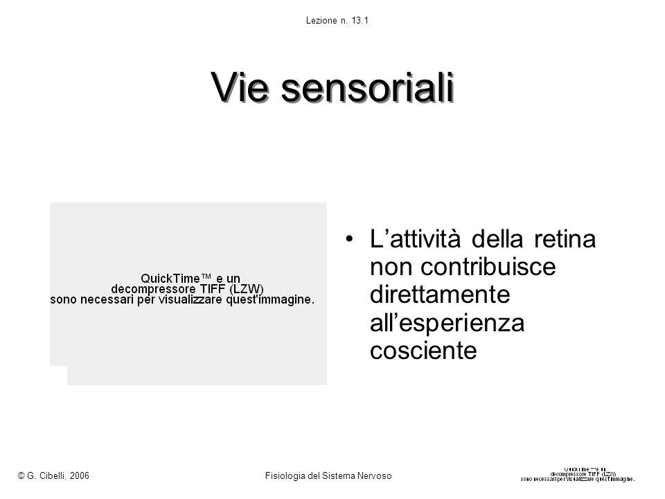 © G. Cibelli, 2006 Fisiologia del Sistema Nervoso. Lezione n. 13.1. Vie sensoriali.