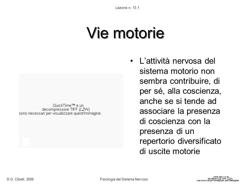 © G. Cibelli, 2006 Fisiologia del Sistema Nervoso. Lezione n. 13.1. Vie motorie.