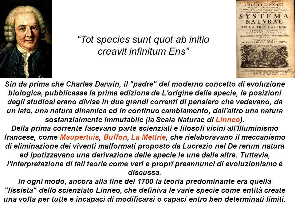 Tot species sunt quot ab initio creavit infinitum Ens
