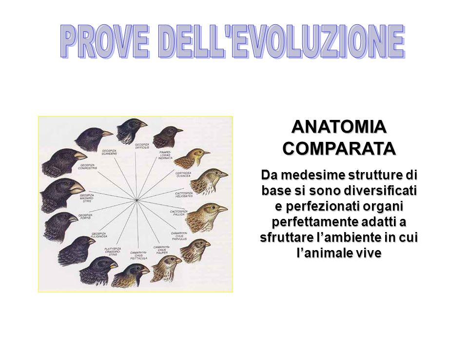 PROVE DELL EVOLUZIONE ANATOMIA COMPARATA