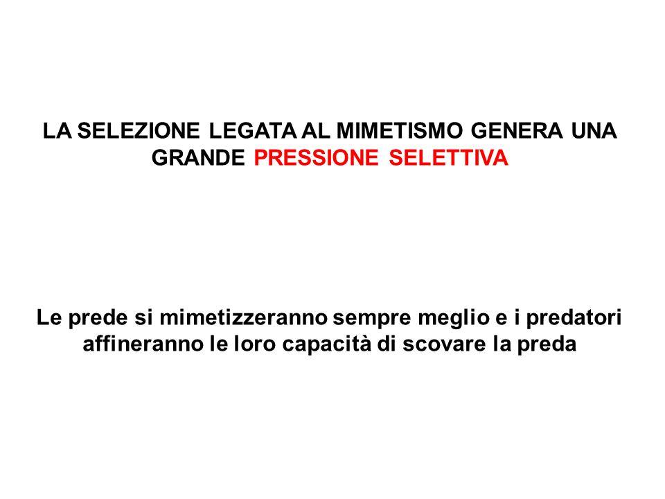 LA SELEZIONE LEGATA AL MIMETISMO GENERA UNA GRANDE PRESSIONE SELETTIVA