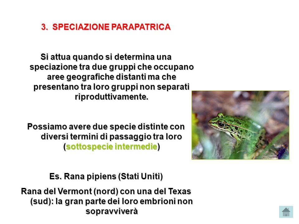 SPECIAZIONE PARAPATRICA Es. Rana pipiens (Stati Uniti)