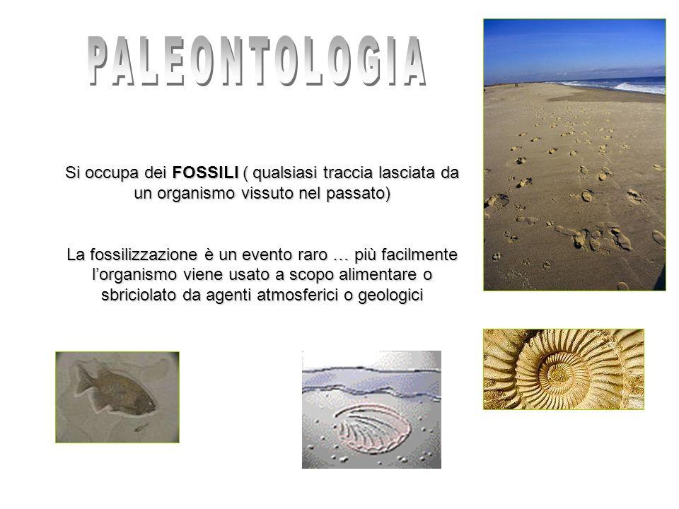 PALEONTOLOGIA Si occupa dei FOSSILI ( qualsiasi traccia lasciata da un organismo vissuto nel passato)