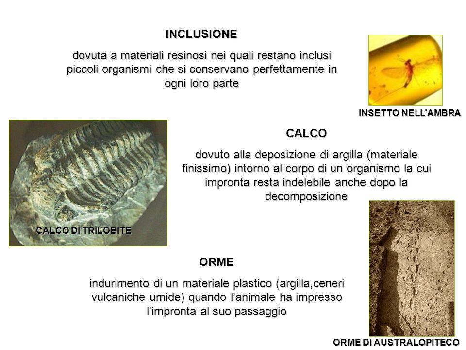 INCLUSIONE dovuta a materiali resinosi nei quali restano inclusi piccoli organismi che si conservano perfettamente in ogni loro parte.