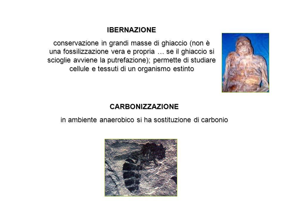 in ambiente anaerobico si ha sostituzione di carbonio