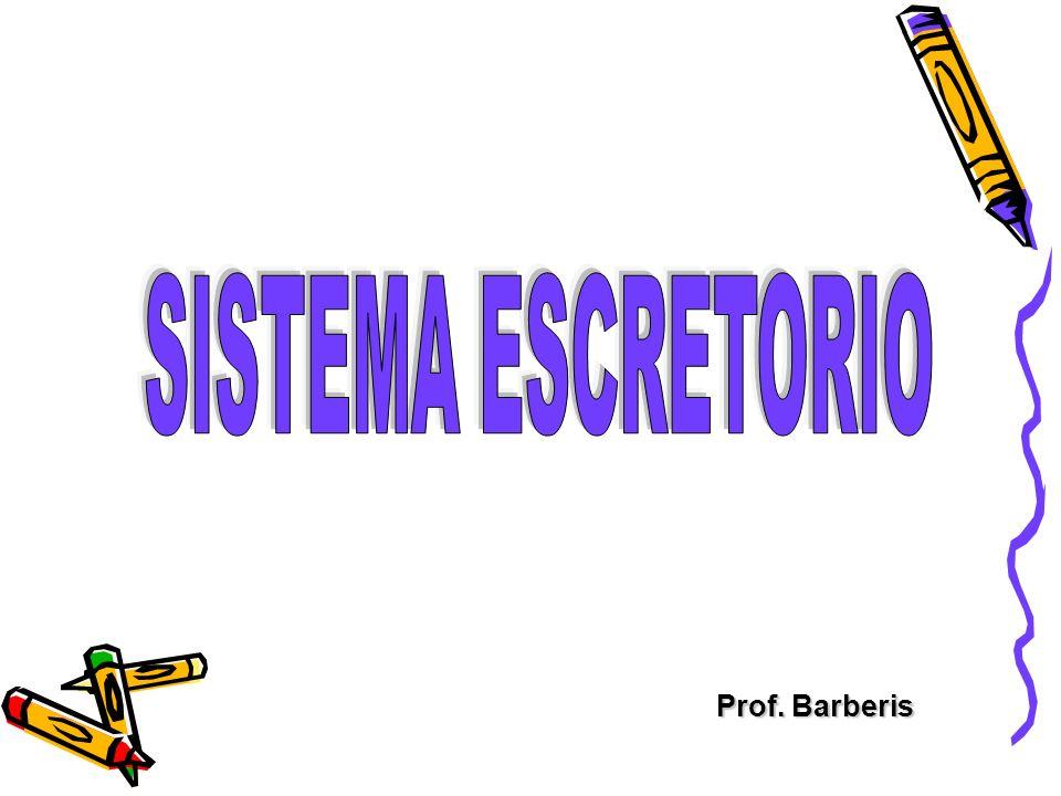 SISTEMA ESCRETORIO Prof. Barberis
