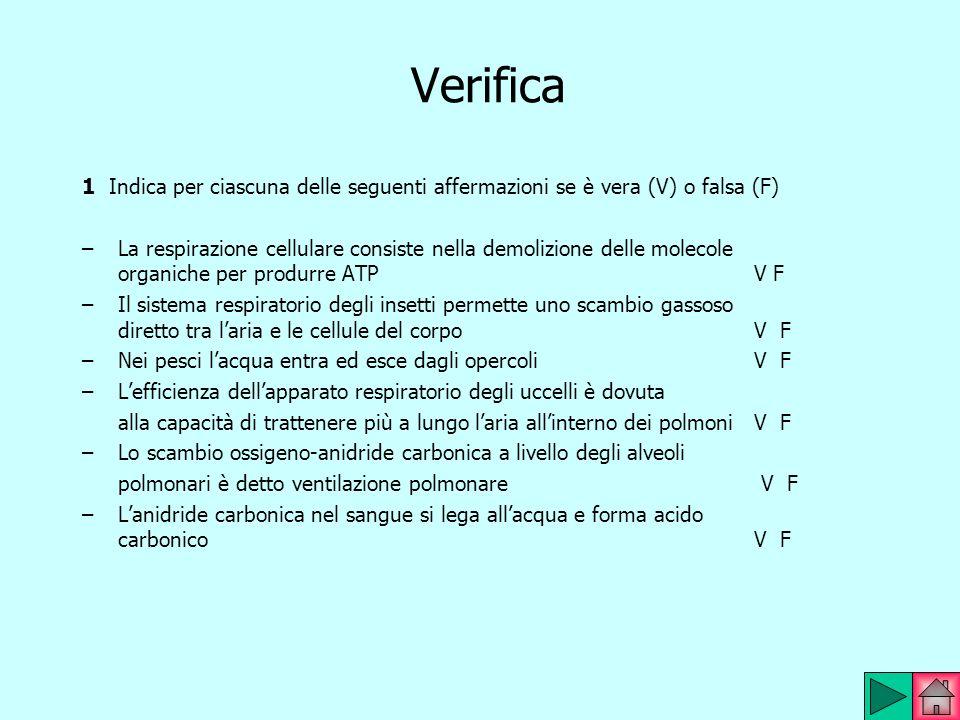 Verifica 1 Indica per ciascuna delle seguenti affermazioni se è vera (V) o falsa (F)