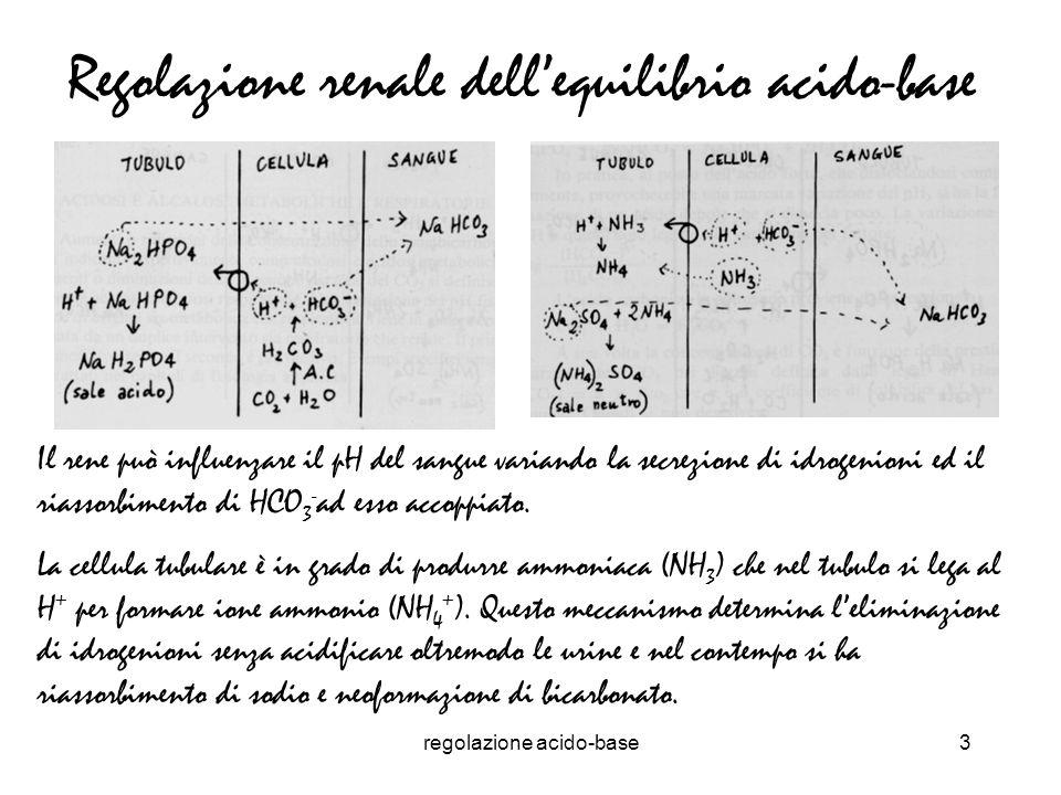 Regolazione renale dell'equilibrio acido-base