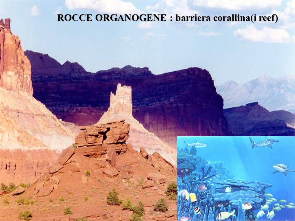 ROCCE ORGANOGENE : barriera corallina(i reef)