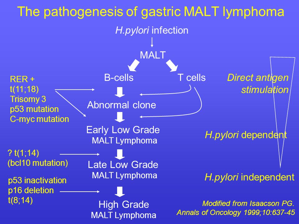 The pathogenesis of gastric MALT lymphoma
