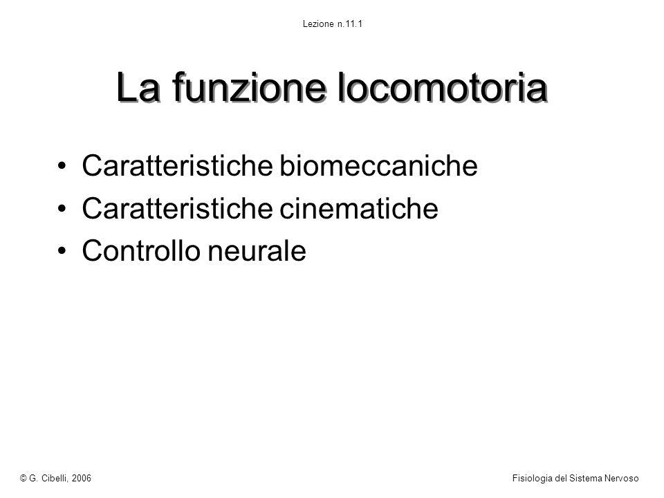 La funzione locomotoria