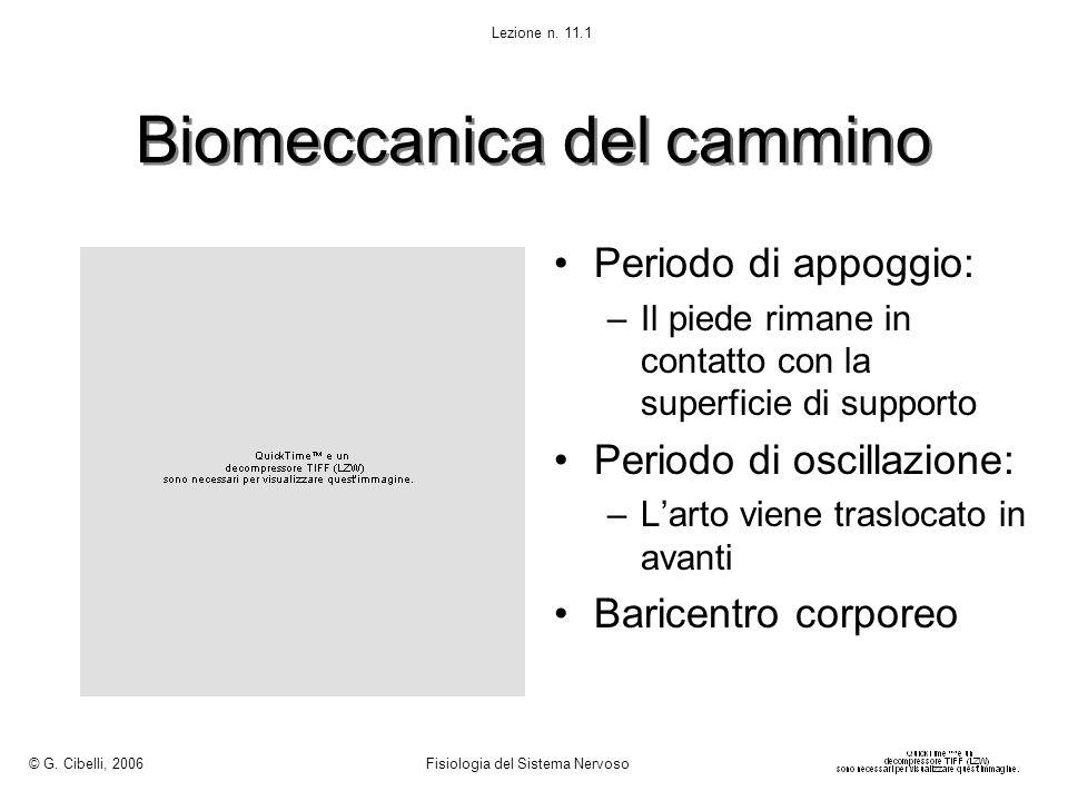 Biomeccanica del cammino