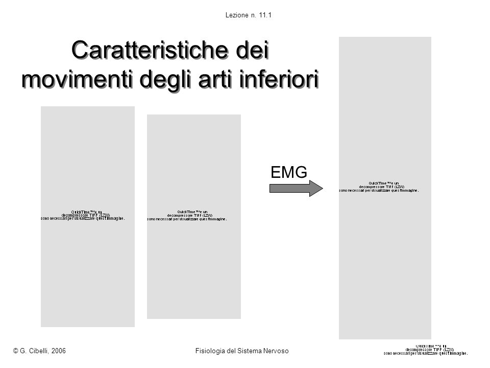 Caratteristiche dei movimenti degli arti inferiori