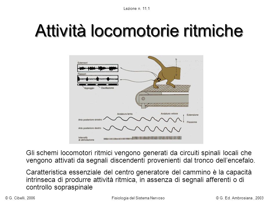 Attività locomotorie ritmiche