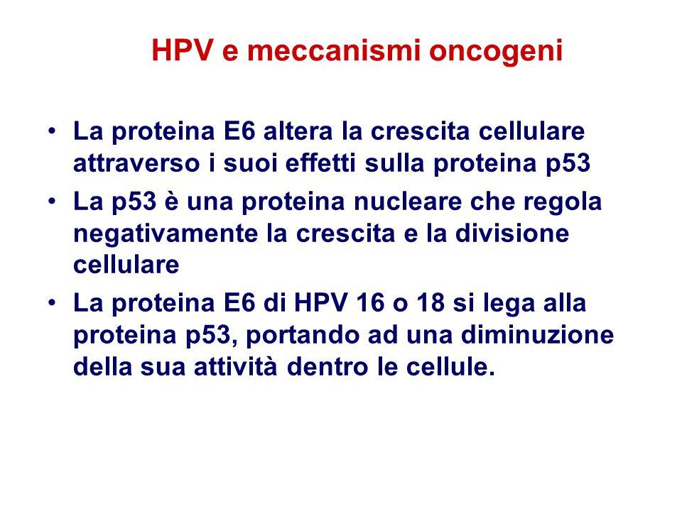 HPV e meccanismi oncogeni
