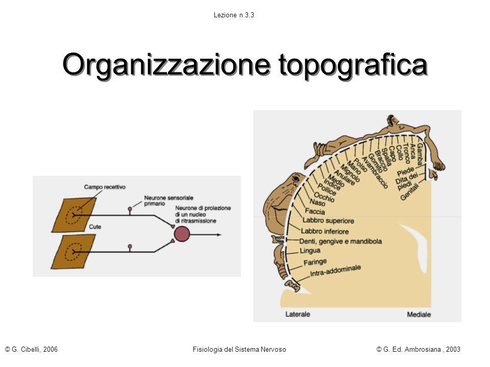 Organizzazione topografica