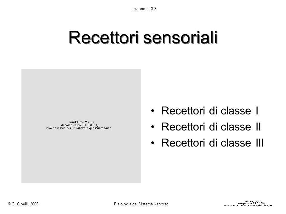 Recettori sensoriali Recettori di classe I Recettori di classe II