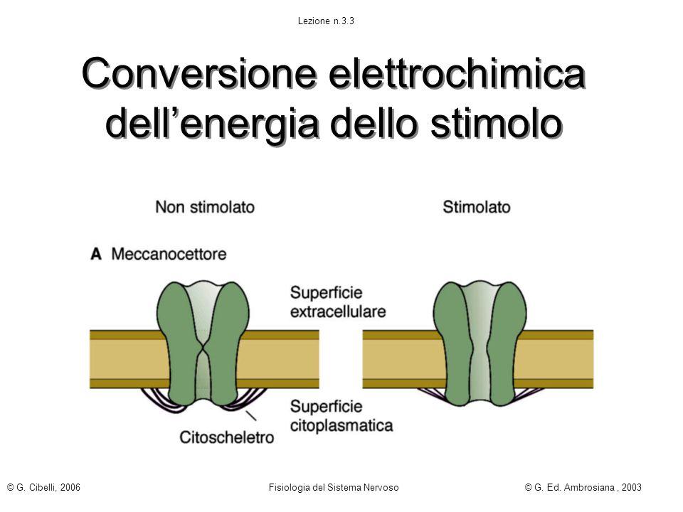 Conversione elettrochimica dell'energia dello stimolo