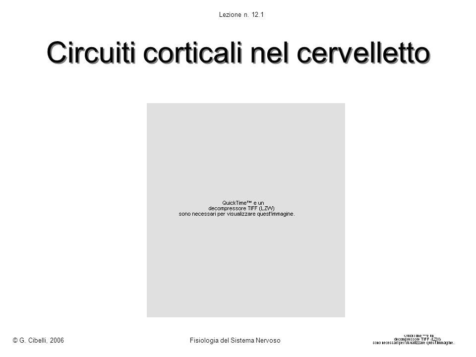 Circuiti corticali nel cervelletto