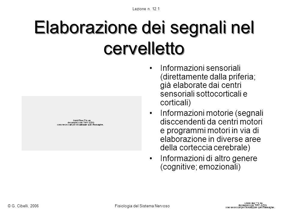 Elaborazione dei segnali nel cervelletto