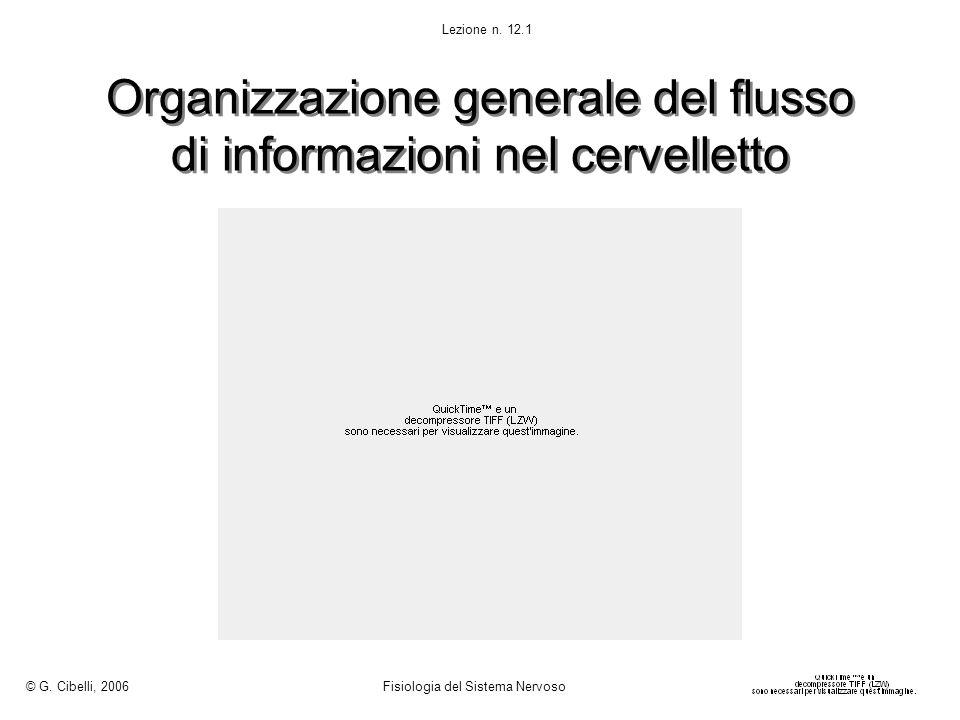 Organizzazione generale del flusso di informazioni nel cervelletto