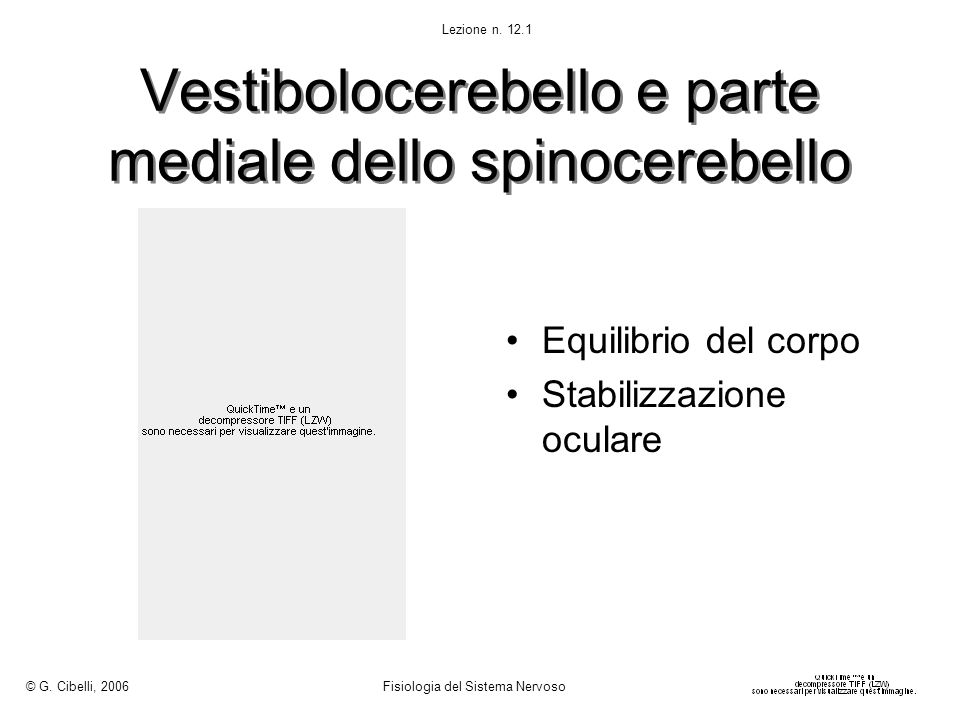 Vestibolocerebello e parte mediale dello spinocerebello