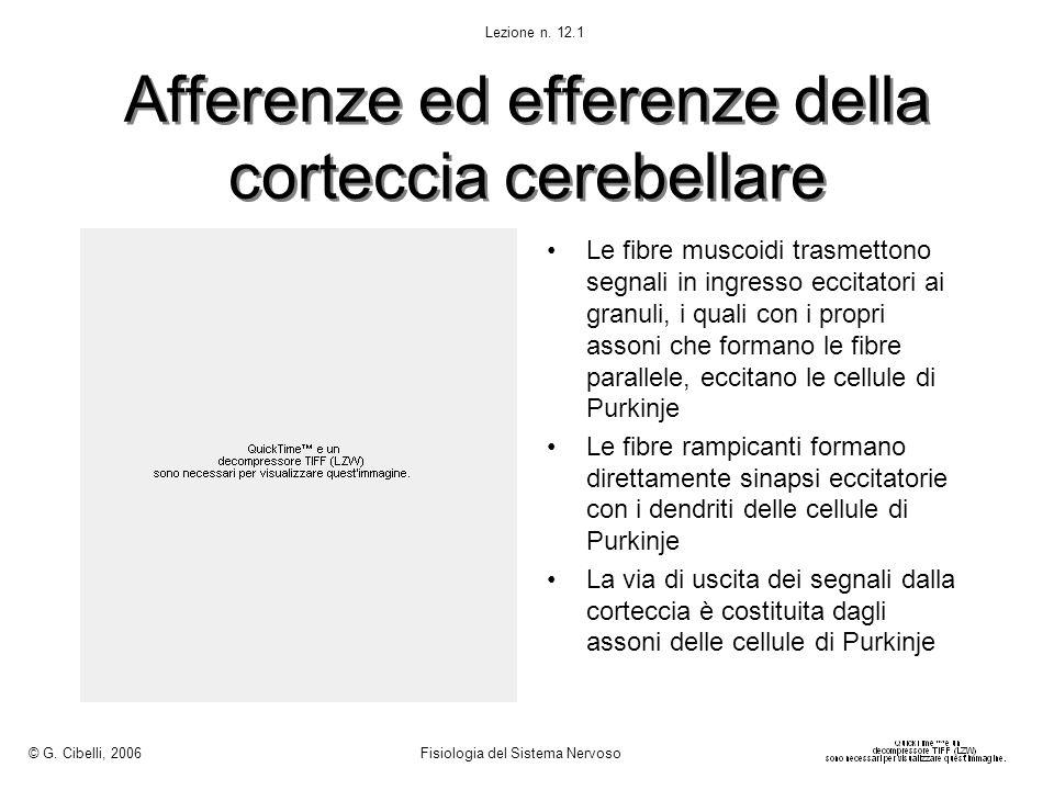 Afferenze ed efferenze della corteccia cerebellare
