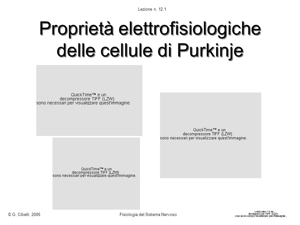 Proprietà elettrofisiologiche delle cellule di Purkinje
