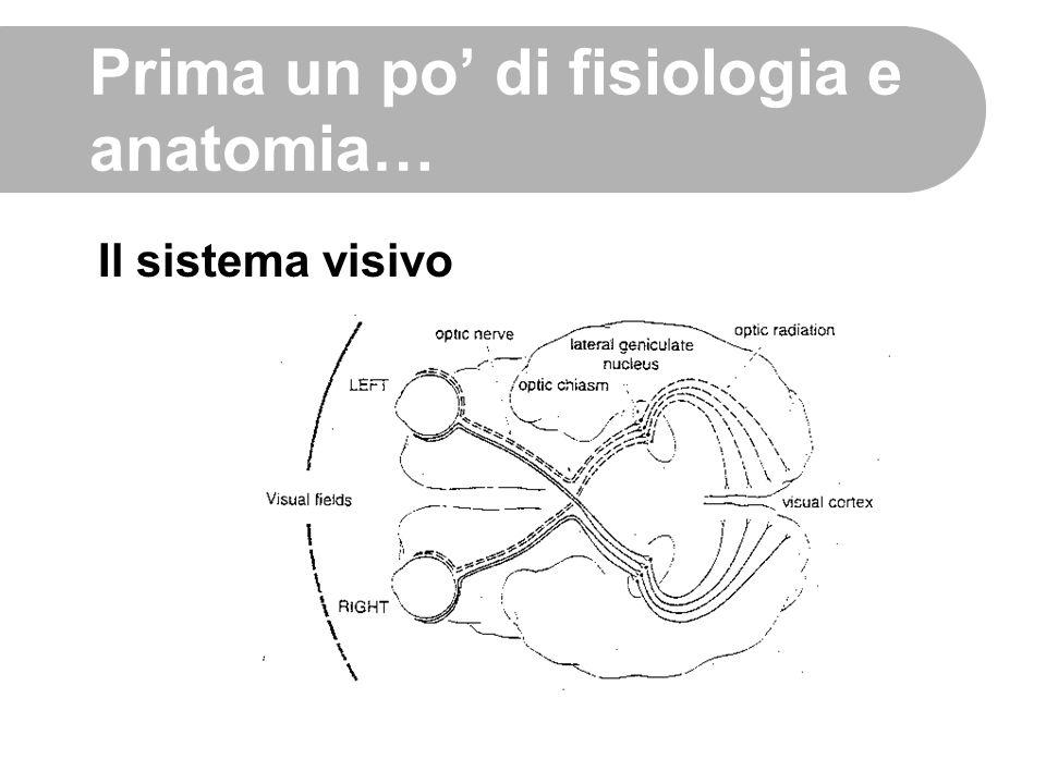 Prima un po' di fisiologia e anatomia…