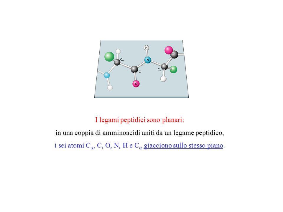 I legami peptidici sono planari:
