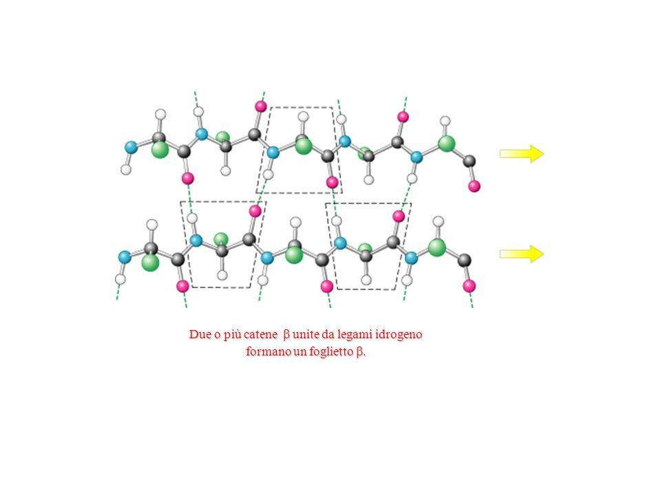 Due o più catene  unite da legami idrogeno formano un foglietto .