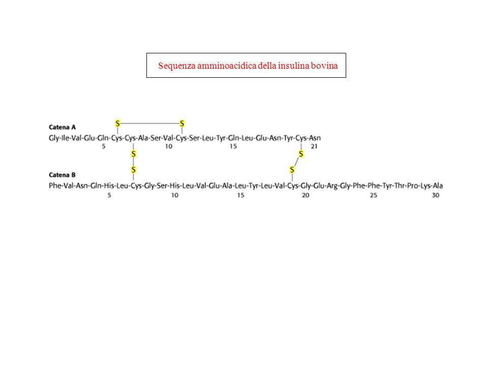 Sequenza amminoacidica della insulina bovina