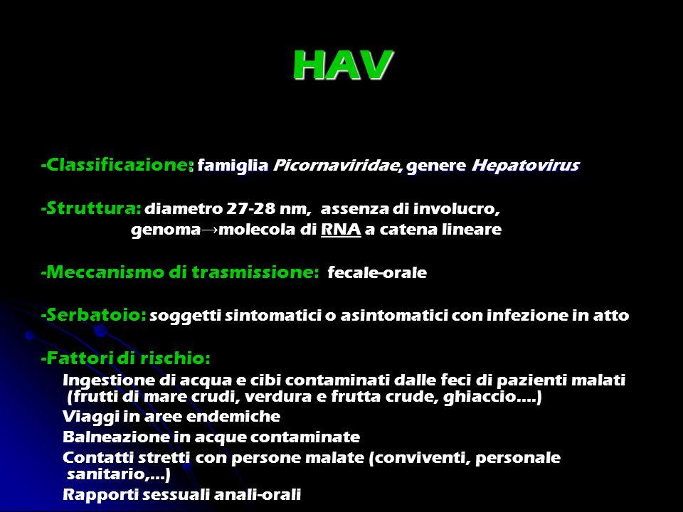 HAV -Classificazione: famiglia Picornaviridae, genere Hepatovirus