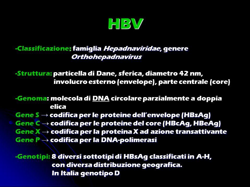 HBV -Classificazione: famiglia Hepadnaviridae, genere