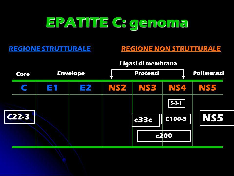 EPATITE C: genoma NS5 C E1 E2 NS2 NS3 NS4 NS5 C22-3 c33c