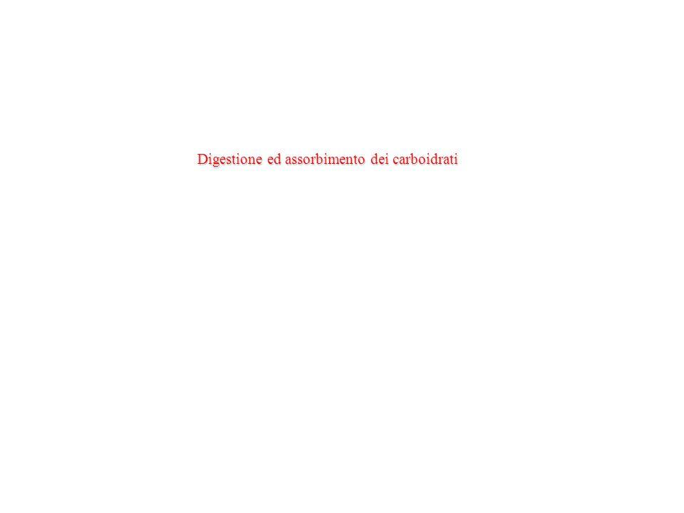 Digestione ed assorbimento dei carboidrati