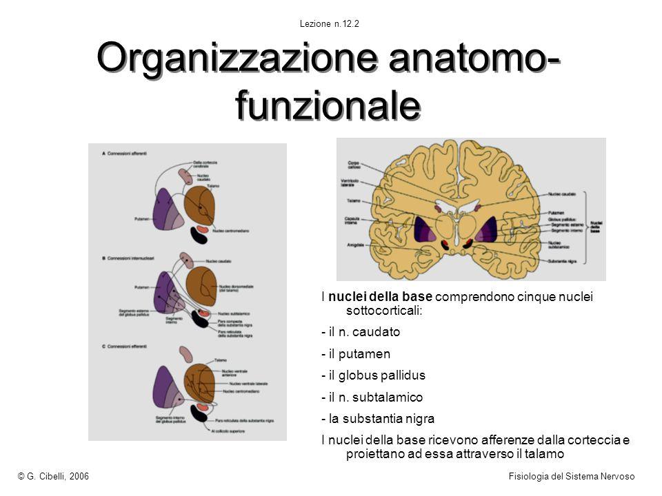 Organizzazione anatomo-funzionale