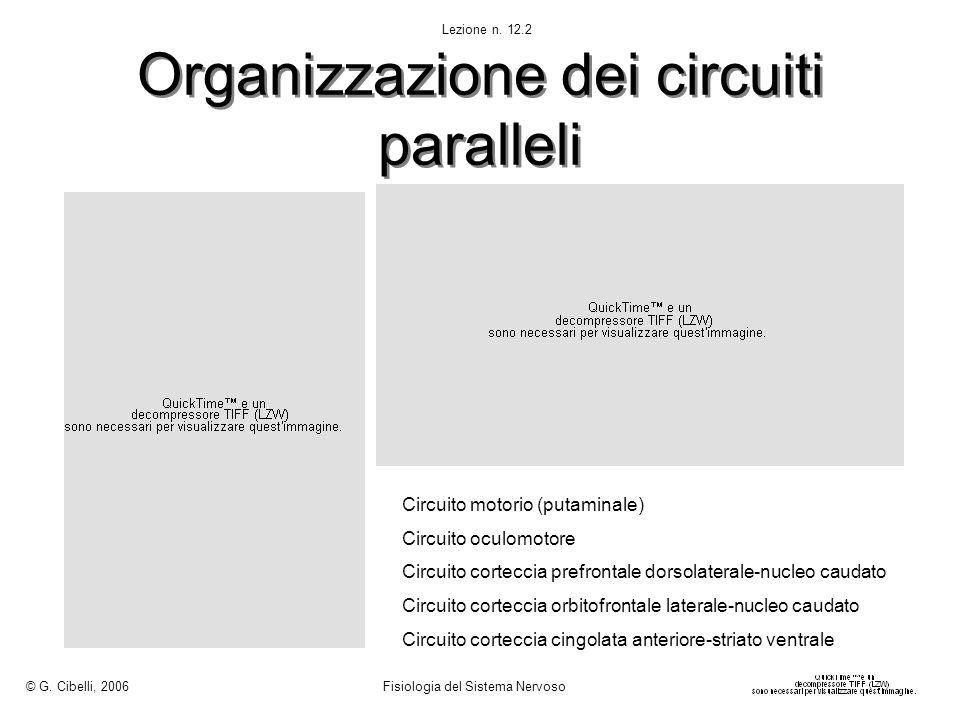 Organizzazione dei circuiti paralleli