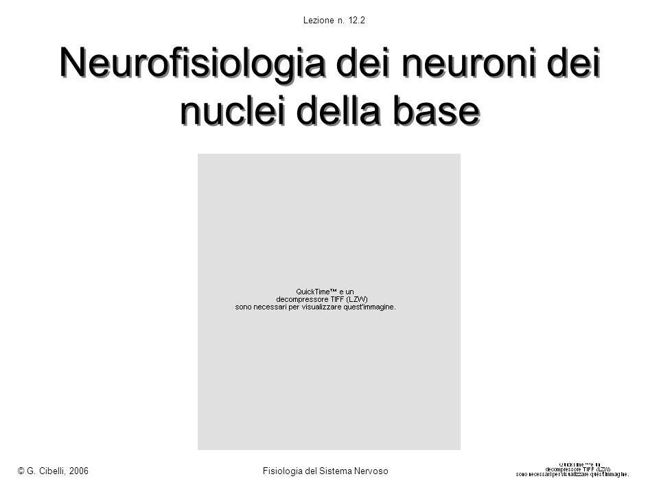 Neurofisiologia dei neuroni dei nuclei della base