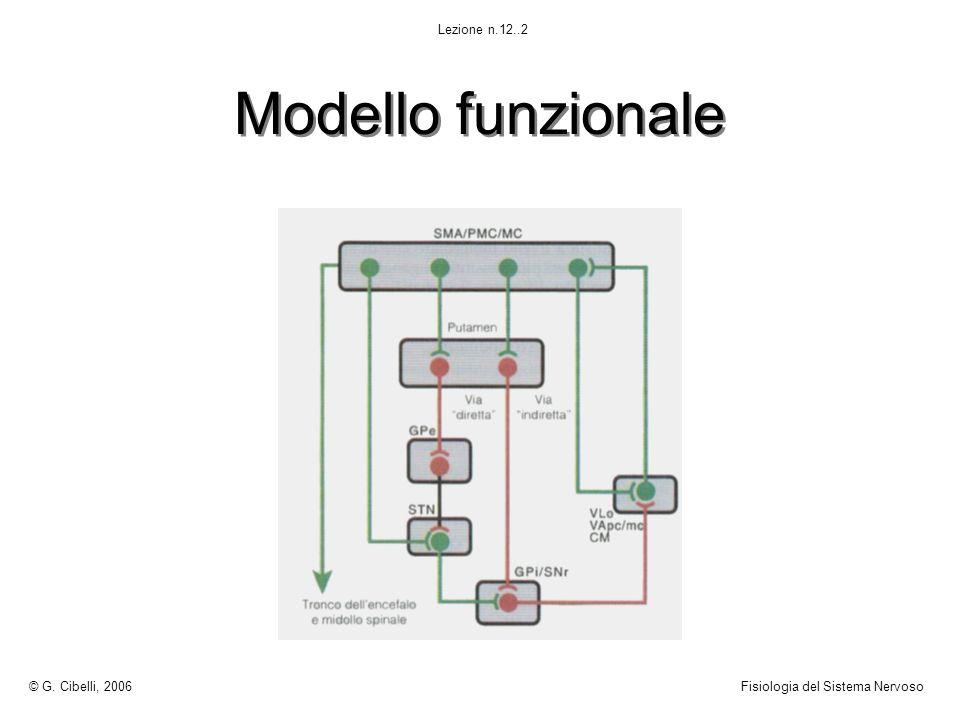 Modello funzionale © G. Cibelli, 2006 Fisiologia del Sistema Nervoso