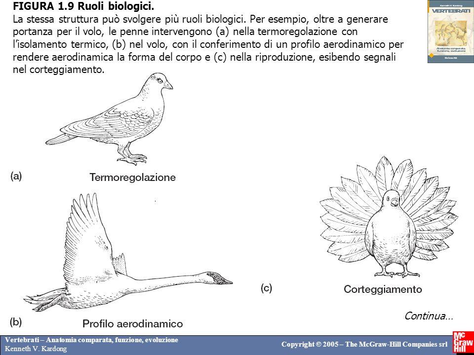 FIGURA 1. 9 Ruoli biologici