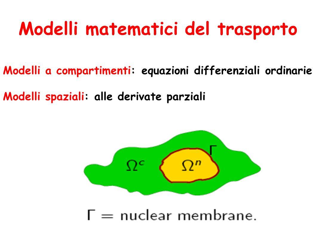 Modelli matematici del trasporto