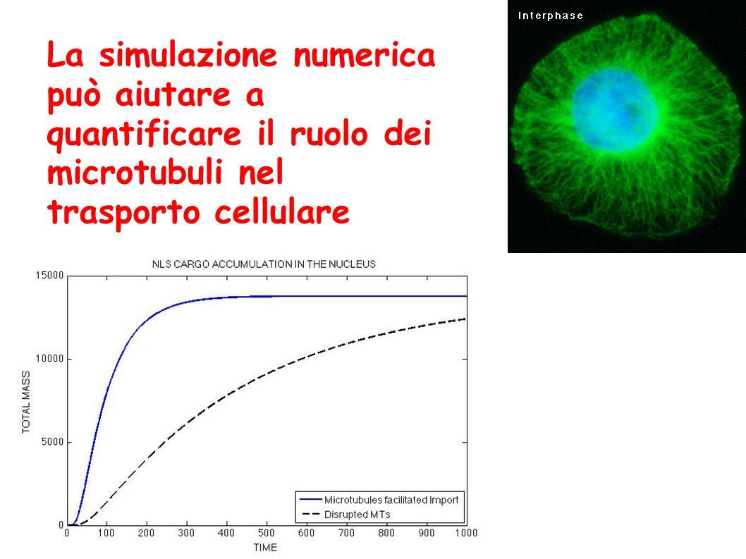 La simulazione numerica può aiutare a