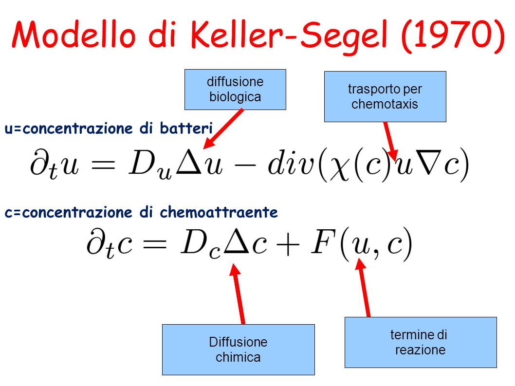 Modello di Keller-Segel (1970)