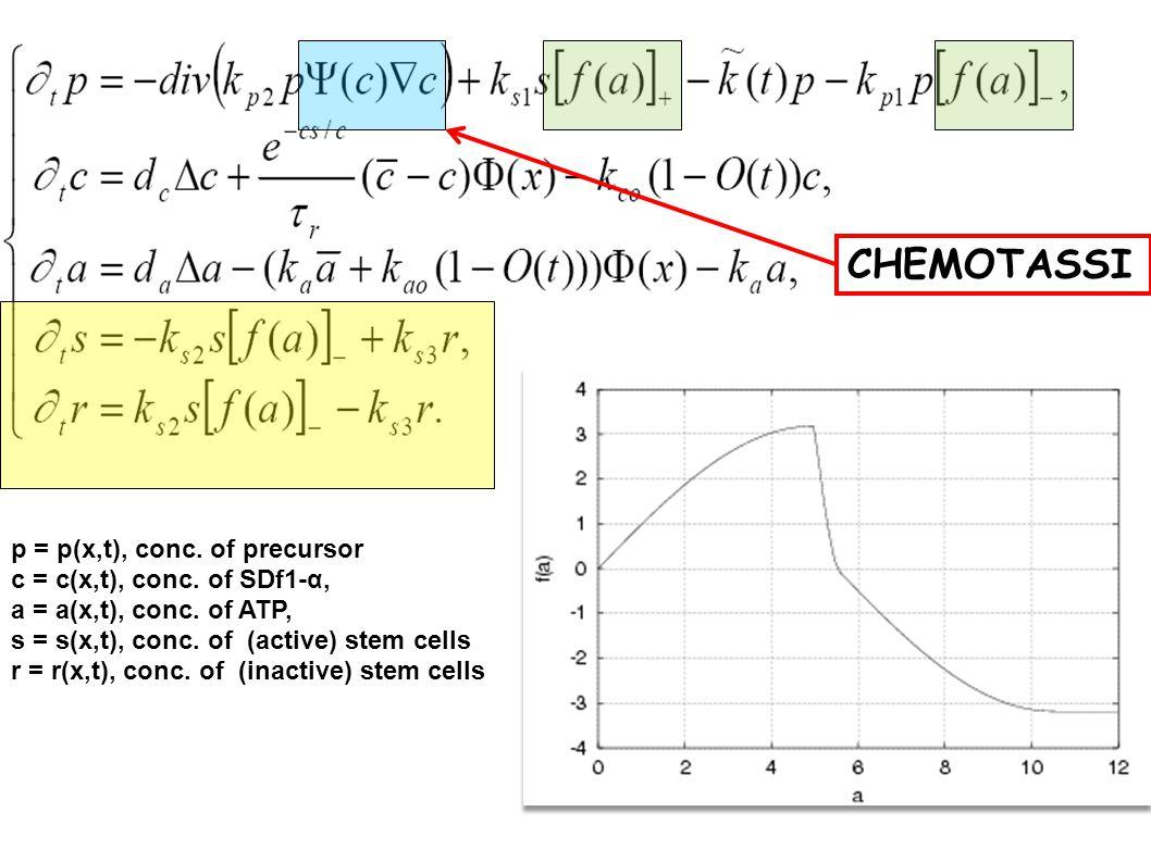 CHEMOTASSI p = p(x,t), conc. of precursor c = c(x,t), conc. of SDf1-α,