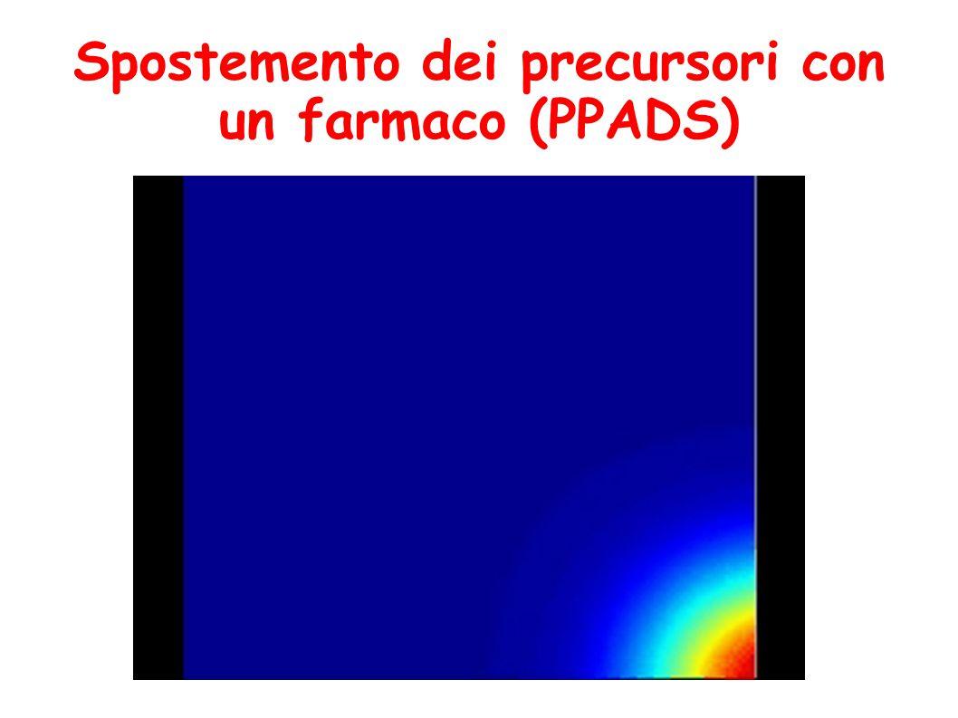 Spostemento dei precursori con un farmaco (PPADS)